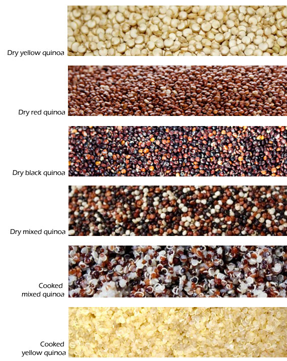 QuinoaTypes