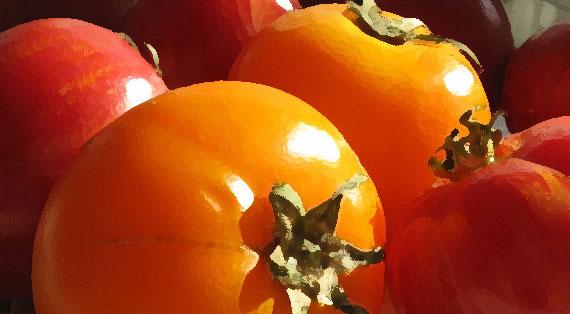 Tomatoes_0579